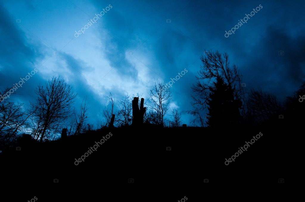 Backlit of mystic blue sky and soilhouette of forest trees in winter