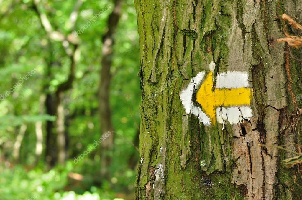 Yellow and white hiking trail signs symbols on tree