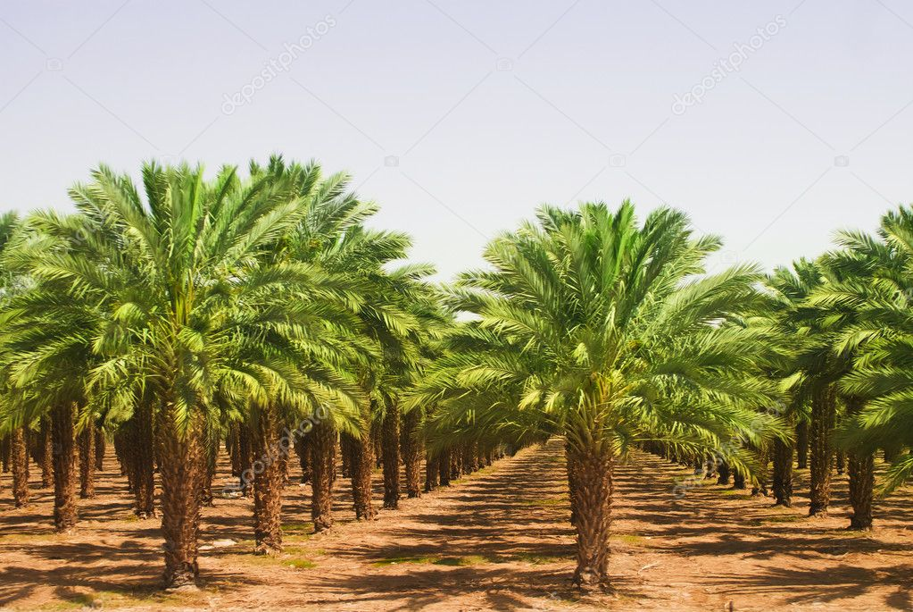 Views of palm oil plantations