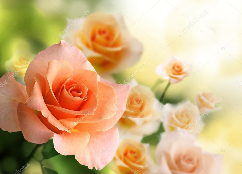 Обои На Рабочий Стол Красивые Большие Цветы