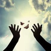 ruka s butterfly v nebi