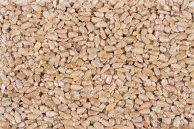Sunflower seeds, background, texture