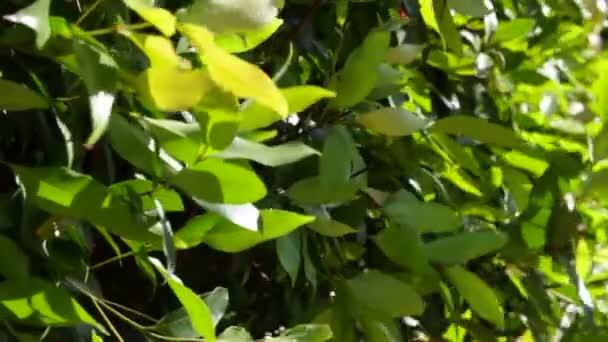 Tropical green bush