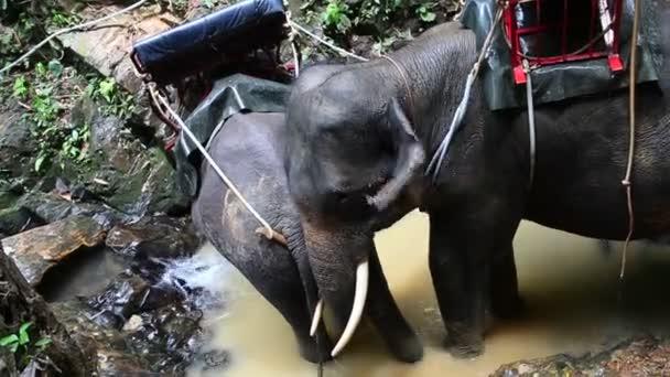 Thaiföld. elefánt