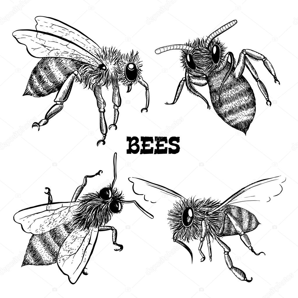 Collections of honey bee icons