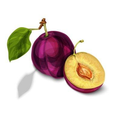 Blue natural organic plum fruit