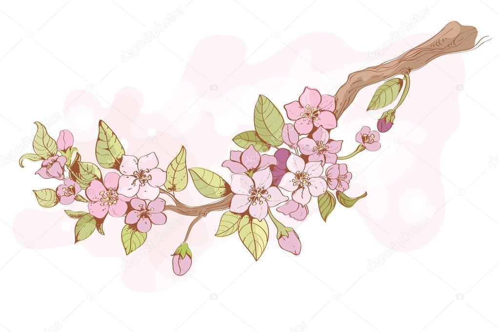 Sakura cherry branch