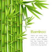 Fényképek reális bambusz háttér
