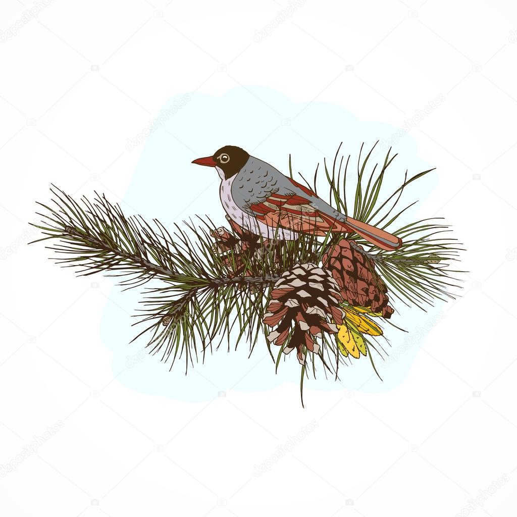 Pine branches with bird