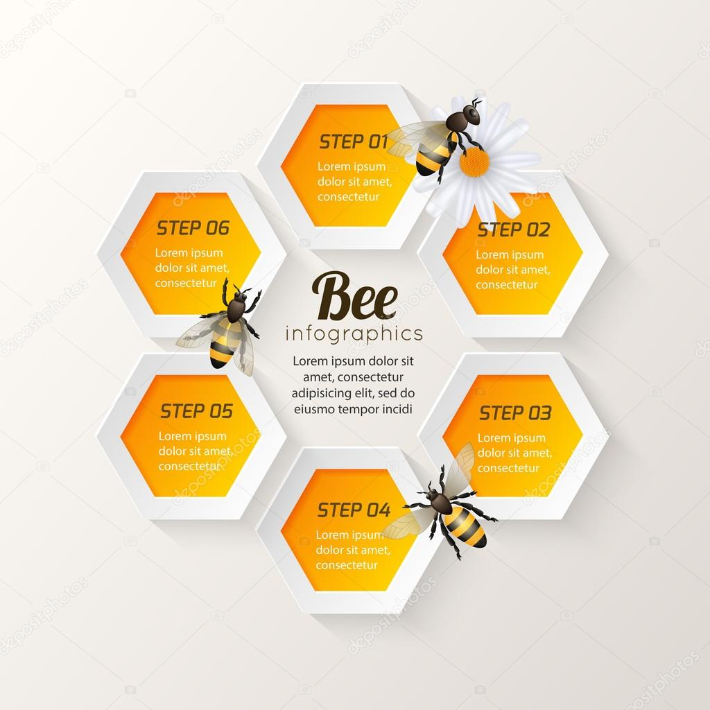 Bee infographics steps stock vector macrovector 47157855 honey bee on daisy and comb background hexagon steps infographic vector illustration vector by macrovector ccuart Gallery
