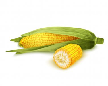 Corn stalk isolated