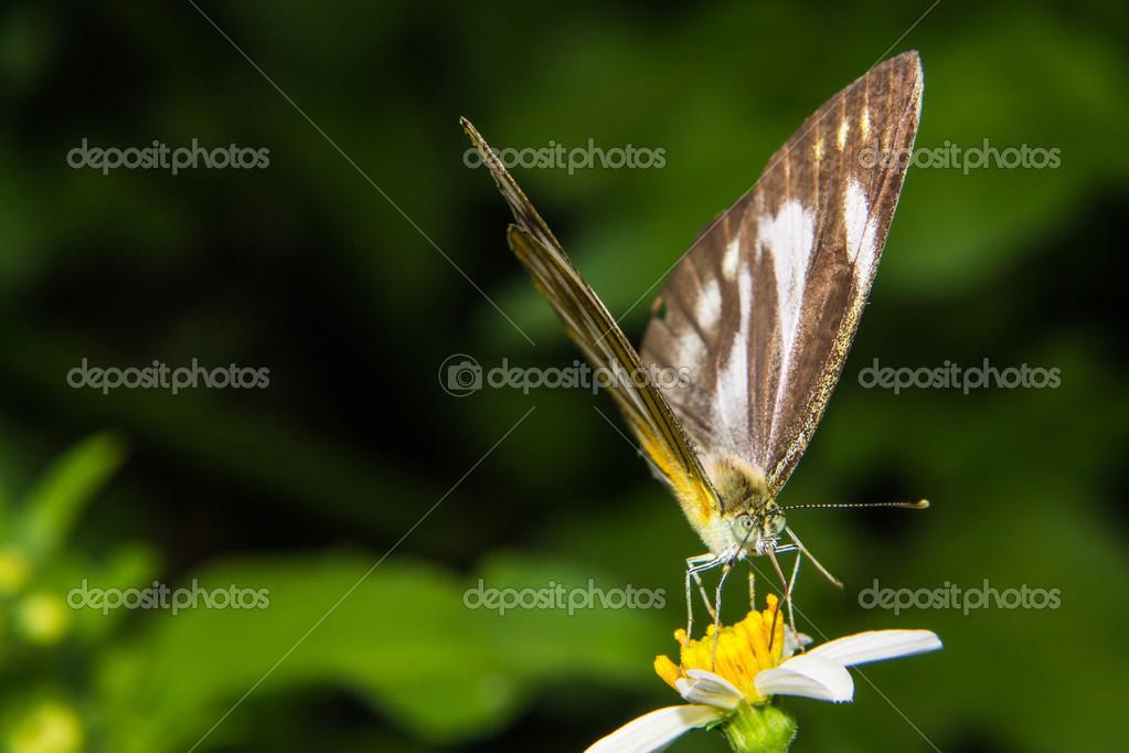 Futterung Auf Kleine Blume Schmetterling Stockfoto C Prwstd Ben