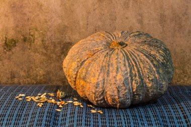 Still Life - Pumpkin And Pumpkin Seeds