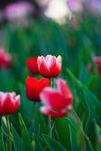 fiori di bella primavera in giardino