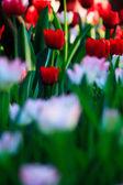 Gyönyörű tavaszi virágok a kertben