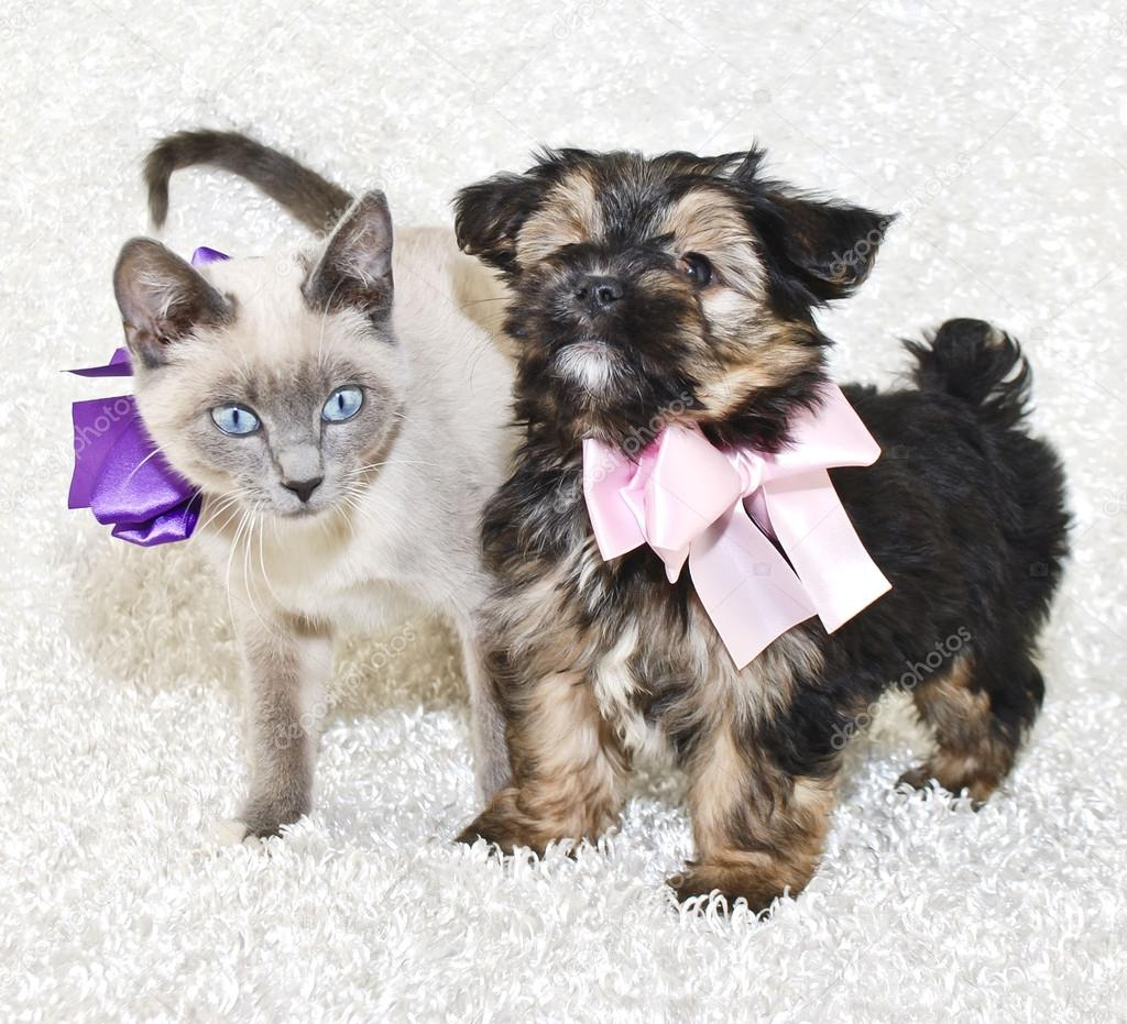 super cute puppy and kitten — stock photo © jstaley401 #35513215