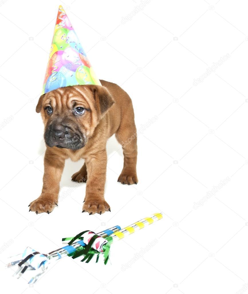 glömt födelsedag Jag har glömt din födelsedag — Stockfotografi © Jstaley401 #35515091 glömt födelsedag