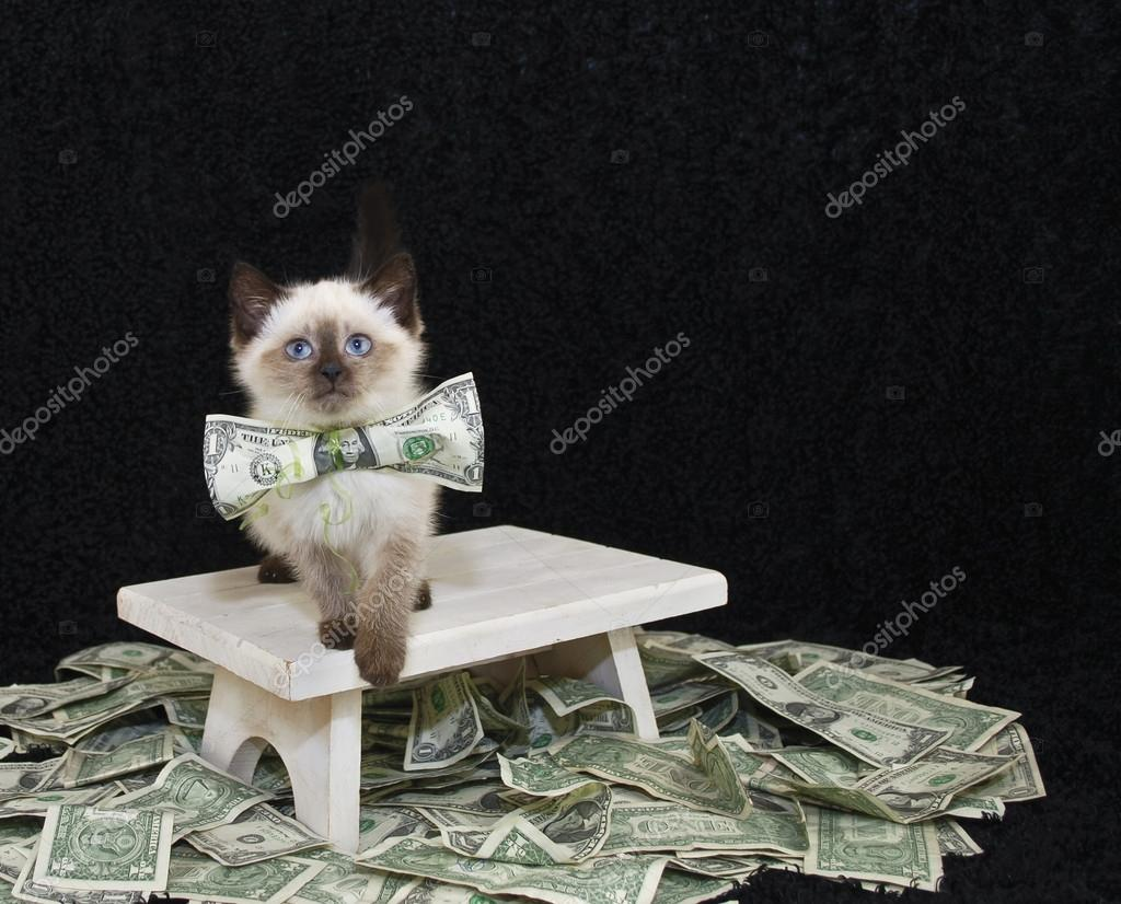 Who Ever Said Money Can t Buy Happiness Never Bought A Kitten