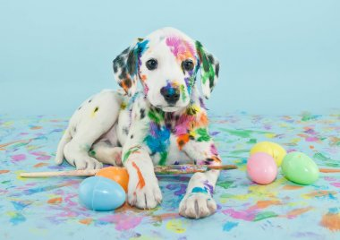 A funny little Dalmatian puppy that looks like he just painted some Easter eggs. stock vector