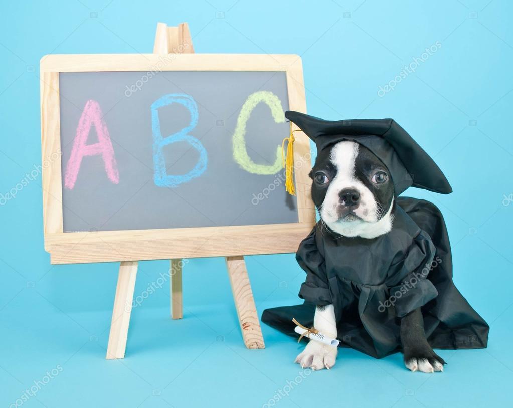 Graduation Puppy — Stock Photo © Jstaley401 #47081011