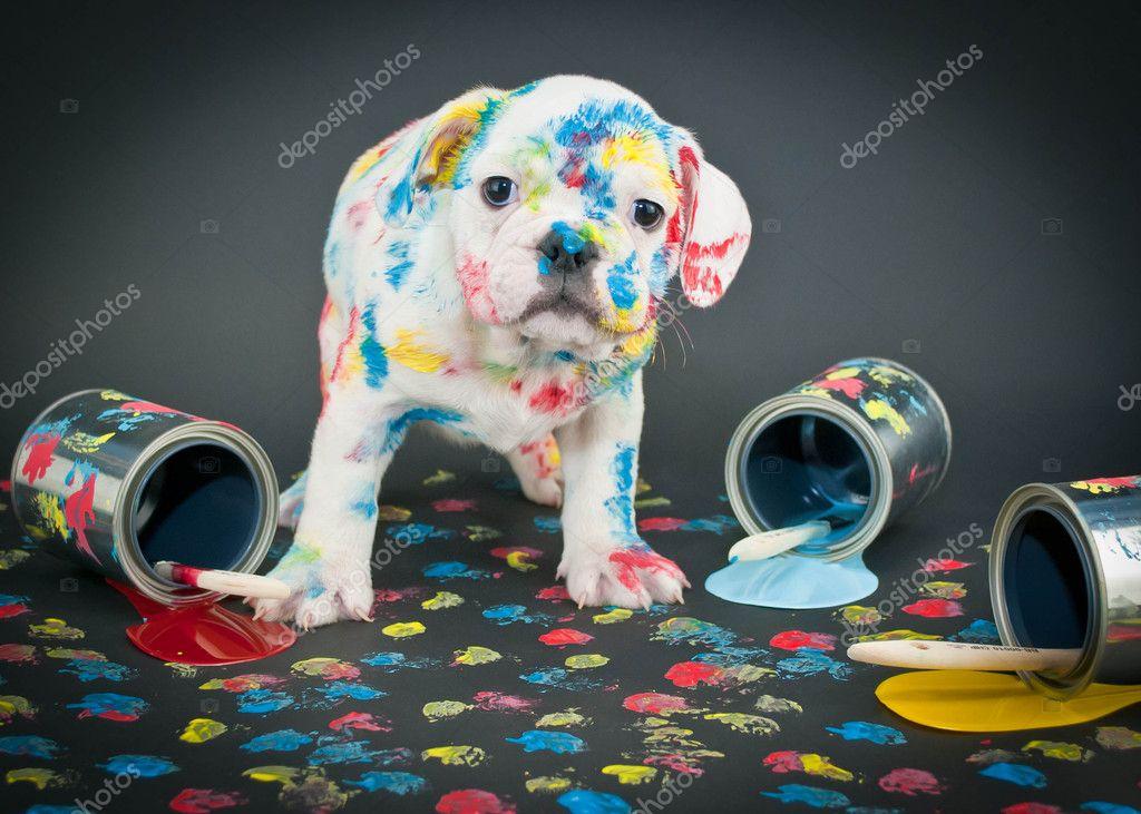 Chien Peint chien peint — photographie jstaley401 © #47148205