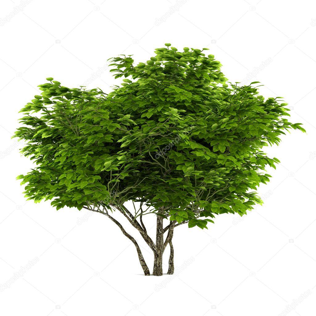 Exotic tree isolated