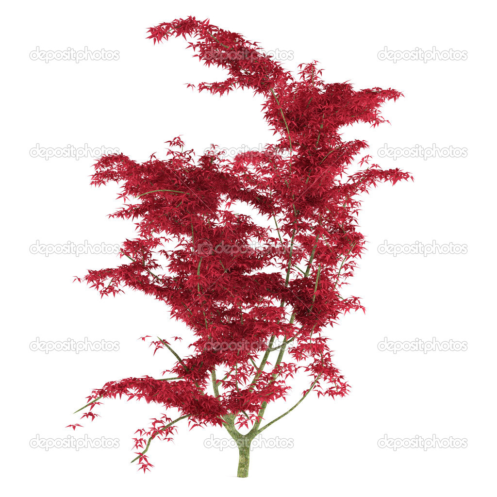 Экзотические красное дерево с большими листьями — Стоковое ...