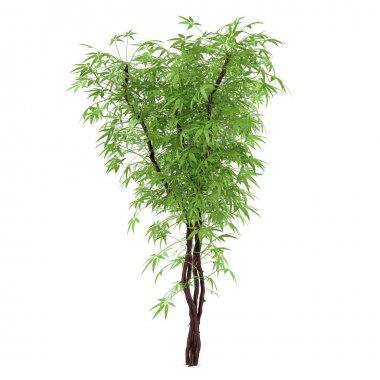 Decorative plant bush