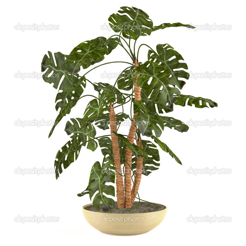 palme pflanzen im topf stockfoto denyshutter 37973745