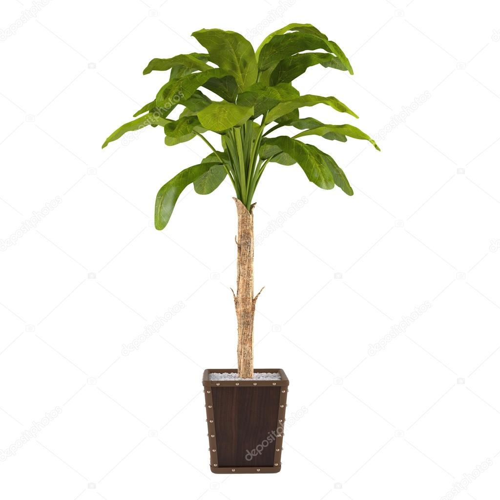 Decorative palm plant in the pot