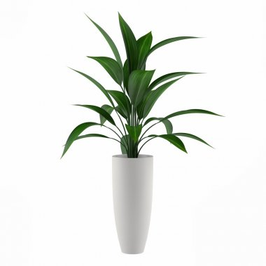 Plant isolated in the pot at the white background stock vector