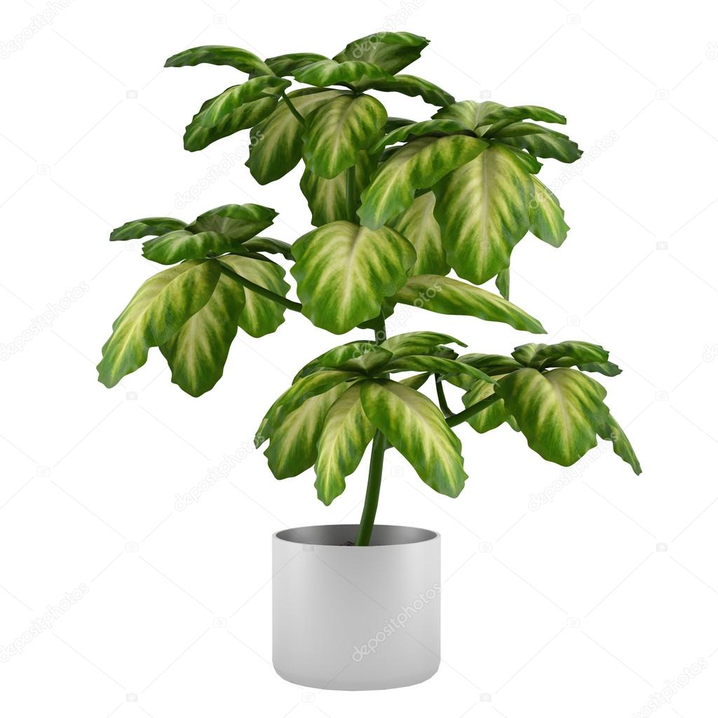 Exotic plant bush in the metal pot