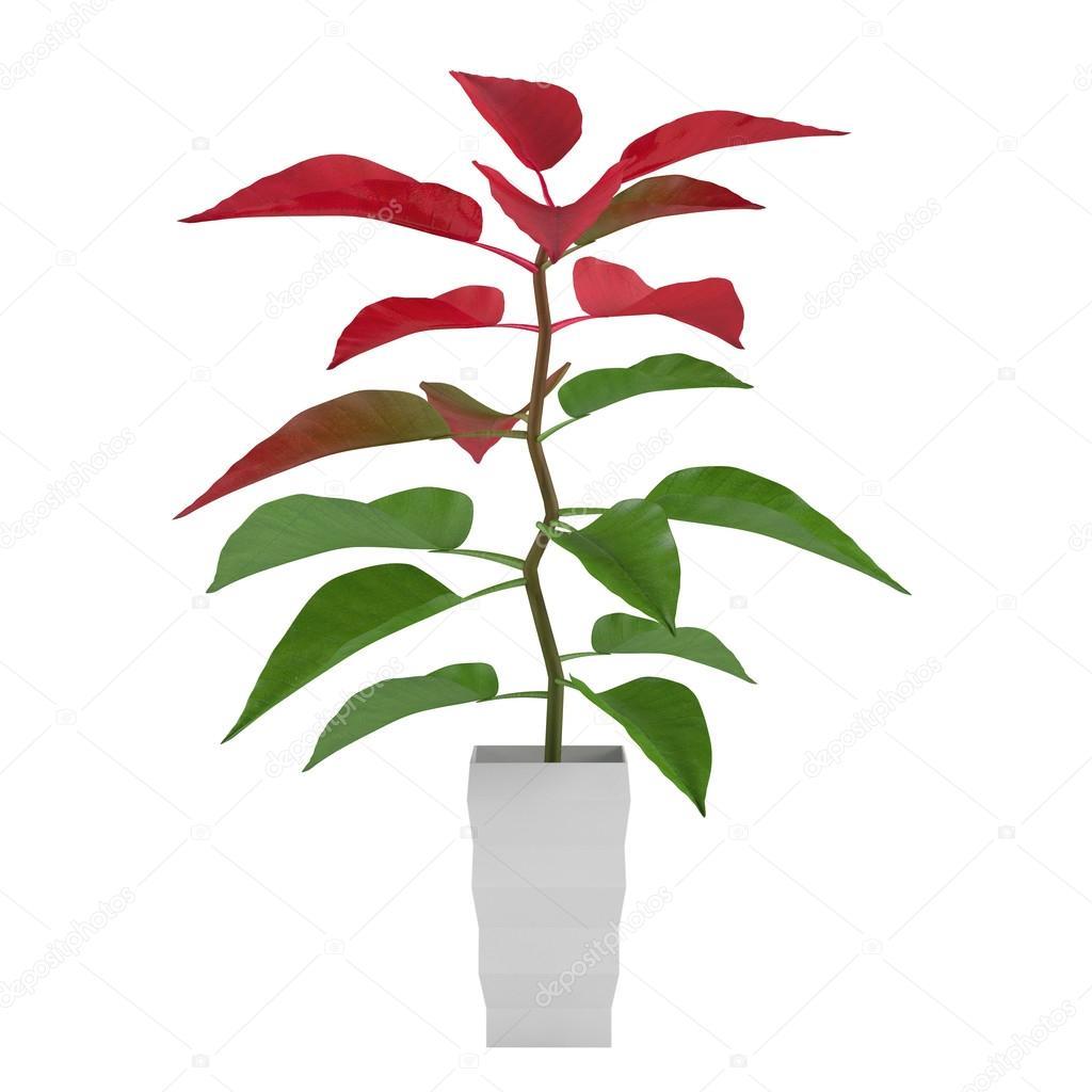 pflanze mit roten und gr nen bl tter im topf stockfoto. Black Bedroom Furniture Sets. Home Design Ideas