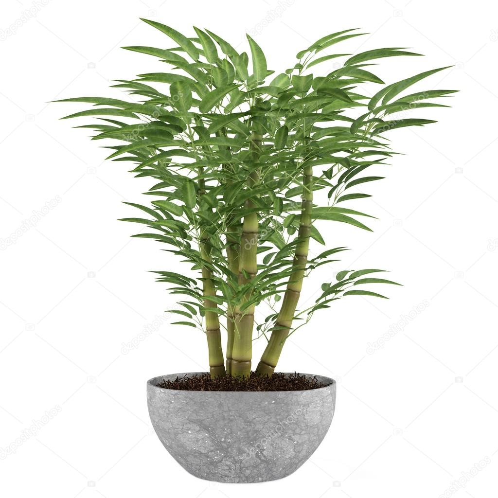 Bamboo exotic bush pot