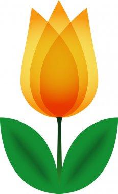 Orange tulip.