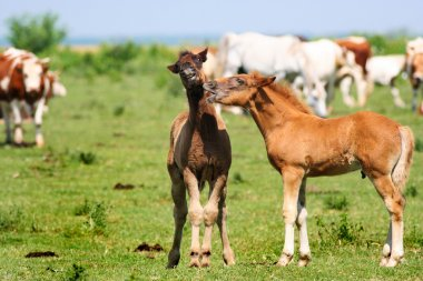 You don't say!? Playful foals