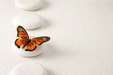 Background with stones and butterfly
