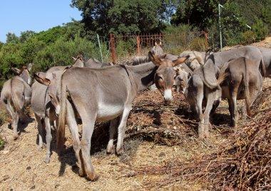 Group of donkeys