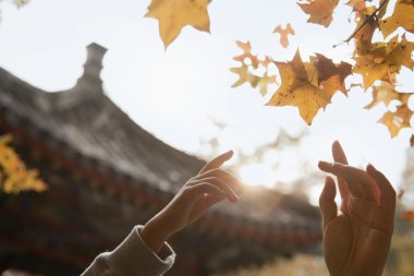 Human hands reaching for a leaf in the autumn