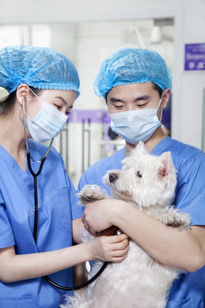 Veterinarians examining dog