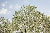 Fotografie Tree tops against blue sky