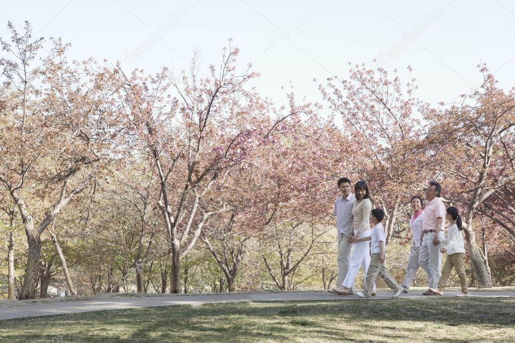 Family taking a walk amongst the cherry trees