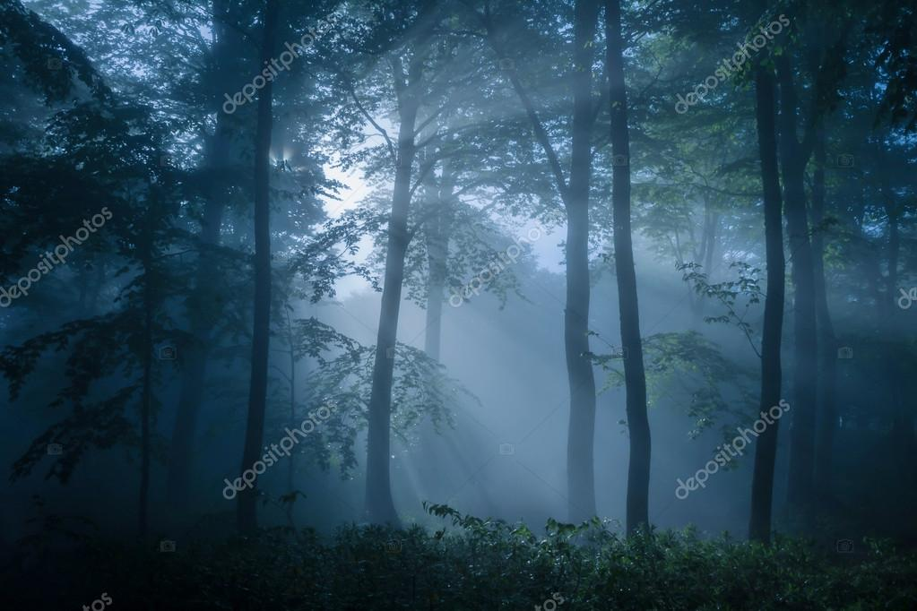 Gloomy forest filled with dim light