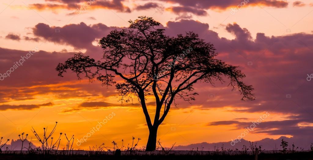 Árvore final de tarde