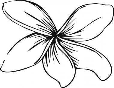Flowers (frangipani )in doodle style