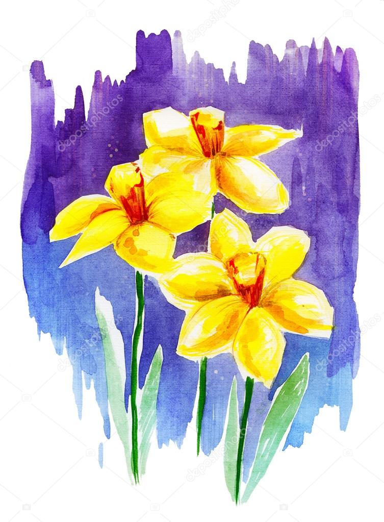 Drawing watercolor yellow flowers narcissus on white background drawing watercolor yellow flowers narcissus on white background stock photo mightylinksfo