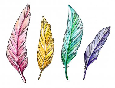 Drawing colorful vintage feathers isolated on white