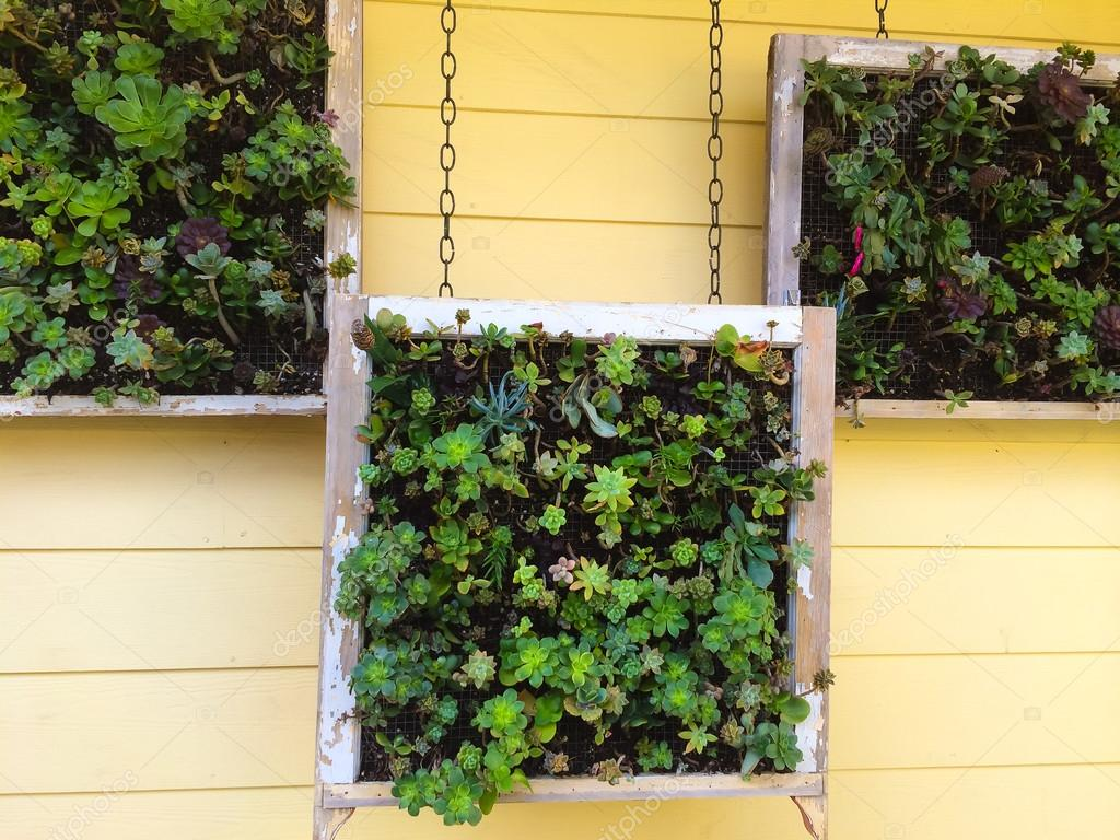 Hanging Succulent Boxes