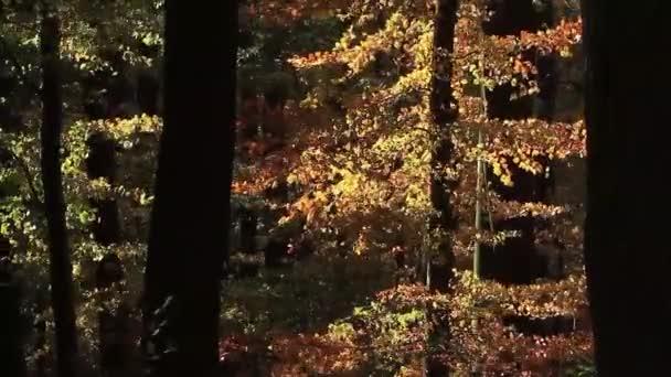 az őszi erdő