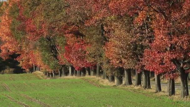 őszén sikátor